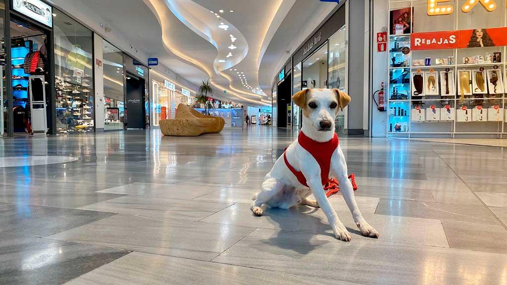 """Los centros comerciales, cada vez más """"dog friendly""""."""