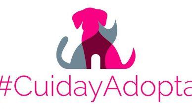 #CuidayAdopta , portal de adopciones de la Asociación Española de Veterinarios Municipales.