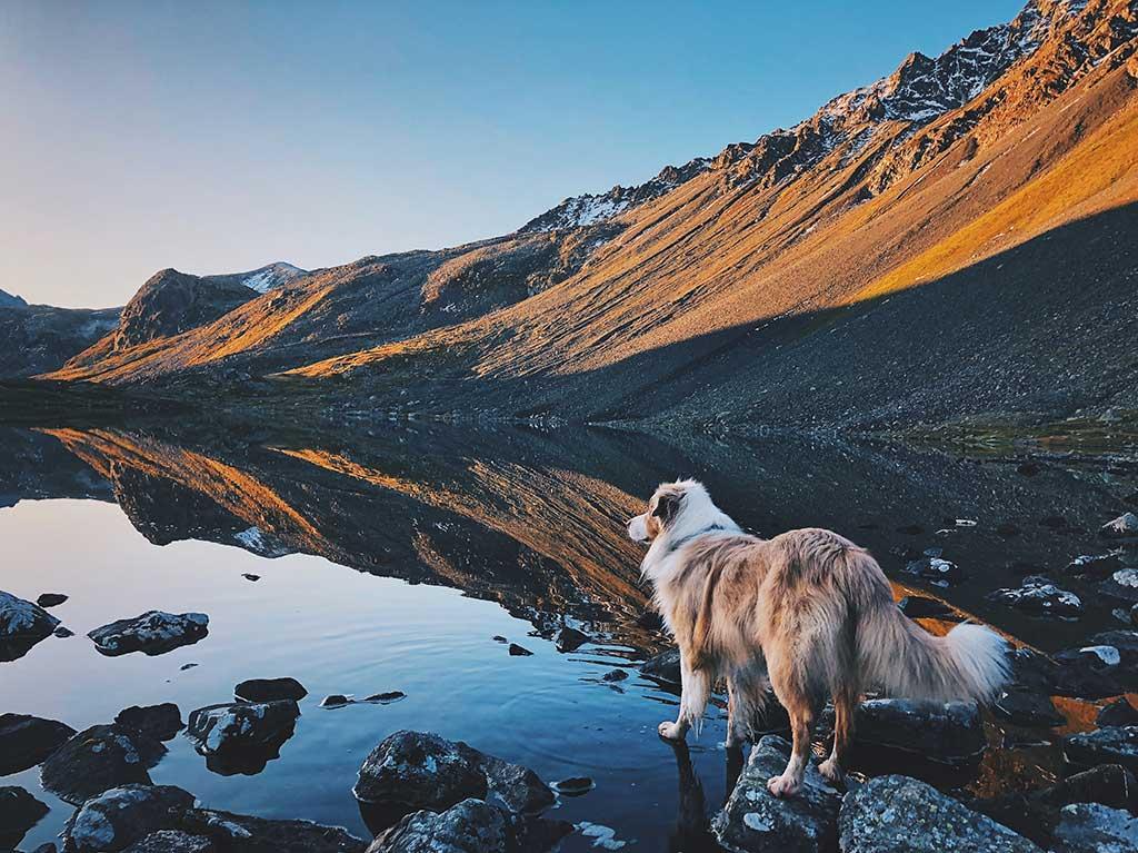 El 3 de marzo se celebra el Día Mundial de la Naturaleza.Edgard & Cooper propone 5 planes con los que disfrutar de la naturaleza junto al mejor amigo del ser humano.