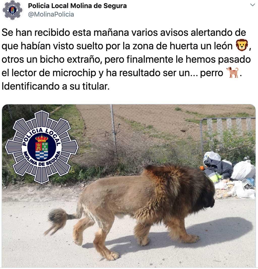 El León de Molina de Segura era... Un perro