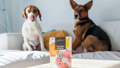 Cómo mantener activo a tu perro durante la cuarentena.