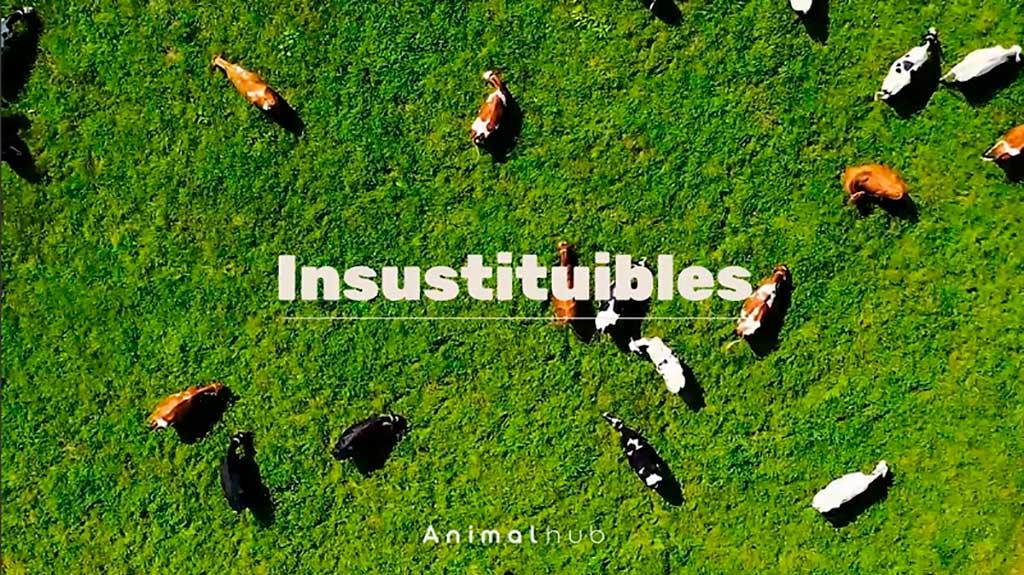 Los veterinarios, insustituibles para el bienestar animal, la salud pública y la seguridad alimentaria