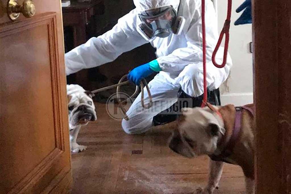 El Refugio rescata a los perros de víctimas de coronavirus.