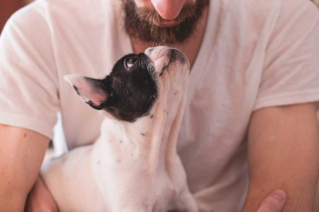 ¿Qué pasa con los perros en caso de separación o divorcio?