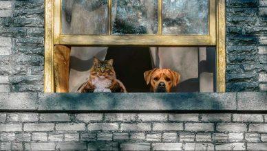 Ansiedad postcoronavirus al separarse los perros de sus dueños.
