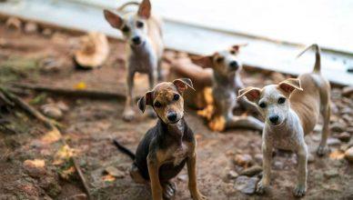 Edgard & Cooper lanza una campaña para paliar la situación de colapso en las protectoras de animales.