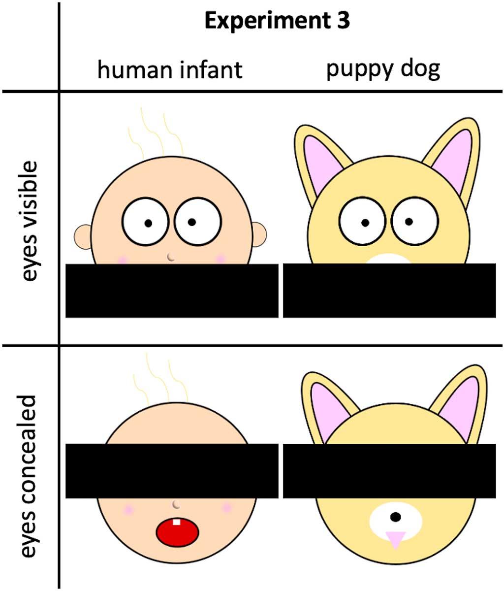 La percepción de los ojos de los bebés humanos o no humanos juega un papel importante en la orientación de las evaluaciones, este efecto puede reflejar información diagnóstica implícita en las propiedades físicas de los ojos; pero también es posible que los ojos pueden ser influyentes, porque la mirada puede proporcionar información sobre los estados mentales de los individuos.