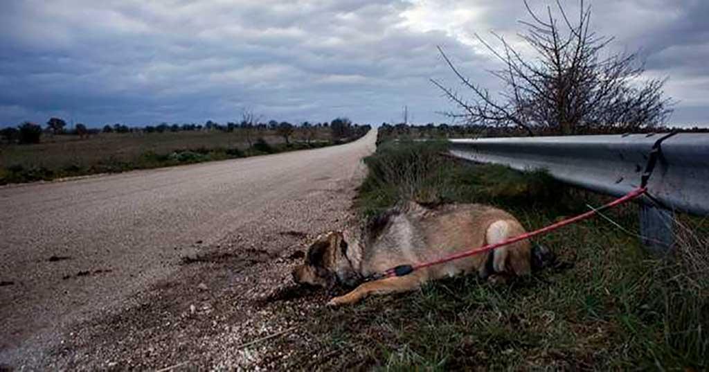 Día Mundial contra el Abandono de Animales: el coronavirus complica la situación en España.