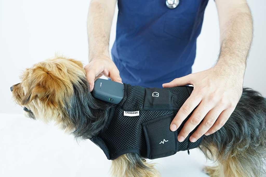 Dinbeat: El primer arnés multiparamétrico para mascotas abre una vía de aplicación para humanos.