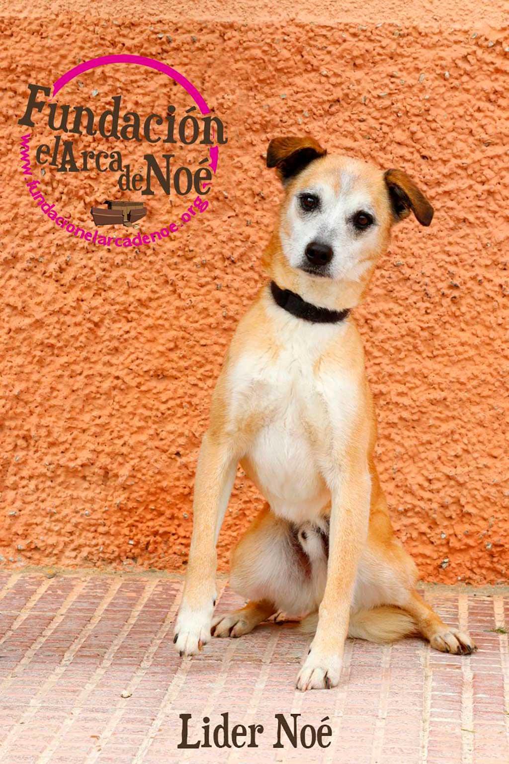 Perroton beca por primera vez en España la adopción responsable de un perro abandonado.
