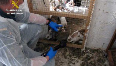 Guardia Civil investiga a un vecino de Moratalla por abandono animal y tenencia ilícita de especies protegidas.