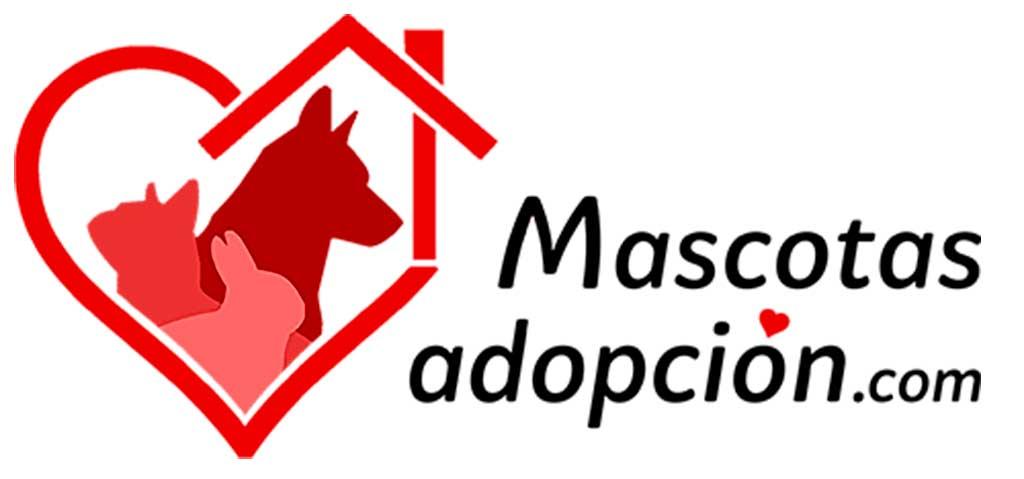 Mascotasadopcion.com, todo lo que se necesita saber para adoptar a una nueva mascota.
