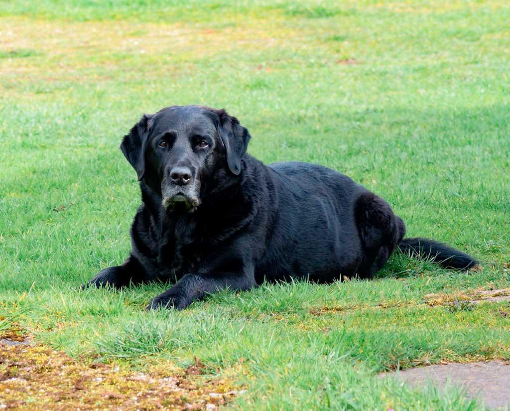 Desconfinamiento saludable: El 40% de propietarios de mascotas tiene un perro o gato senior.