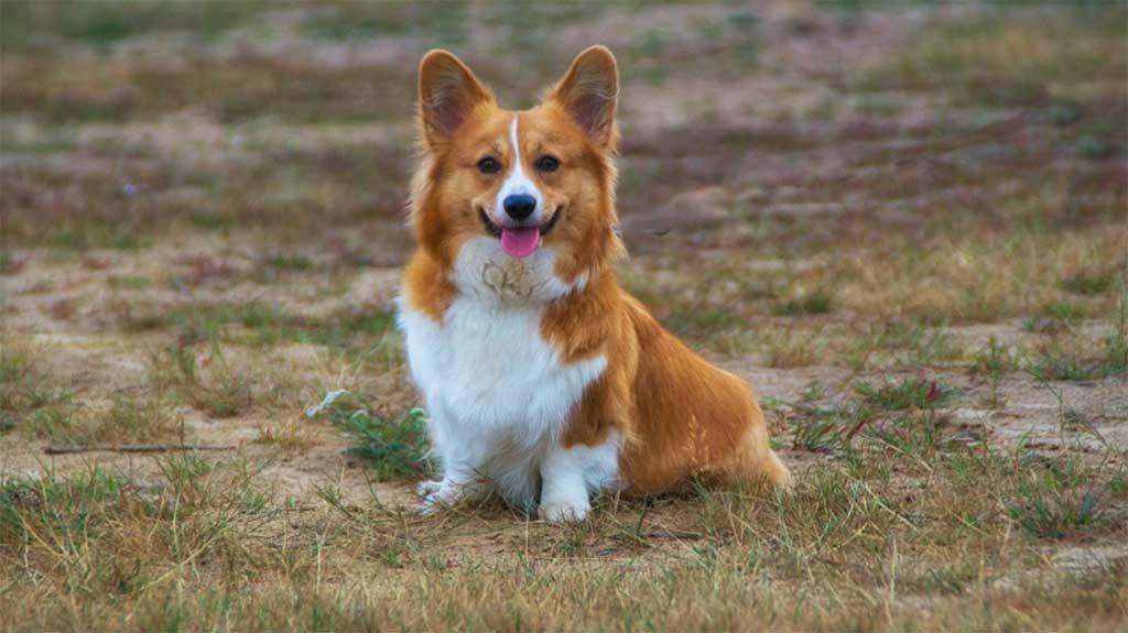 La dermatitis atópica, la alergia canina