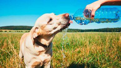 Claves para cuidar de los perros en verano.