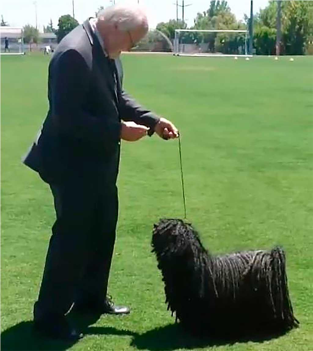 Exposición virtual del American Kennel Club