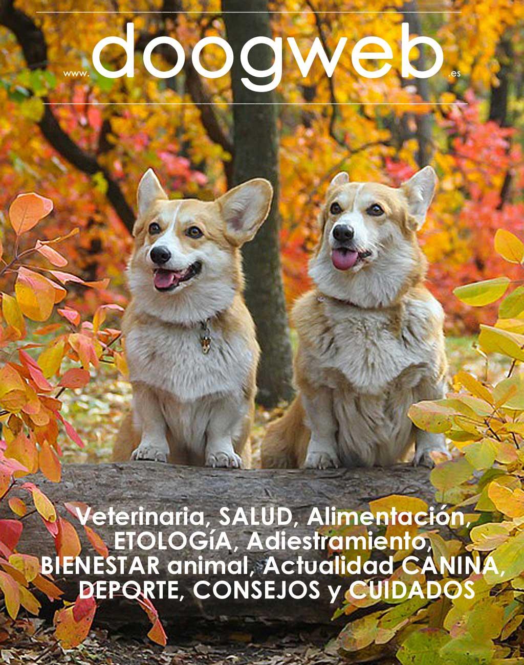 Revista gratis doogweb nº 96, agosto 2020.