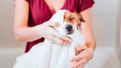La vuelta al cole de los perros felices: consejos para un correcto regreso a la rutina.