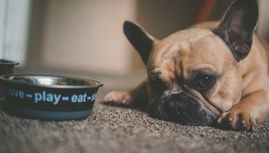 """9 consejos """"muy humanos"""" para el control de peso de nuestras mascotas."""
