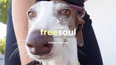 Proyecto Freesoul de Ayuda a la Reinserción de Perros Abandonados.