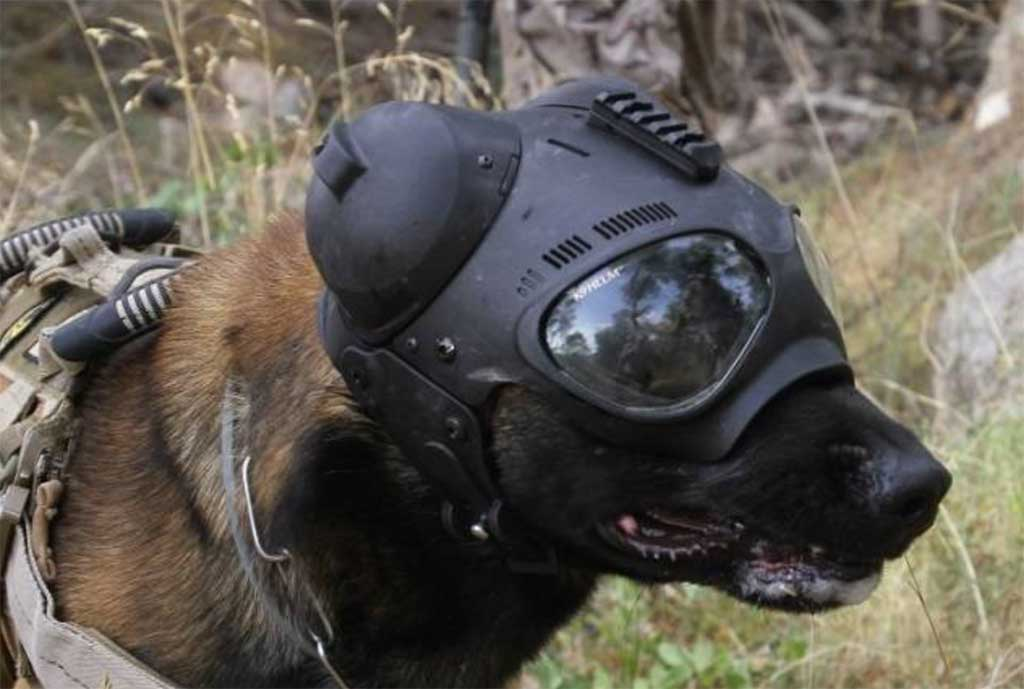 Los perros de intervención de la Fuerza de Guerra Naval Especial de la Armada española.
