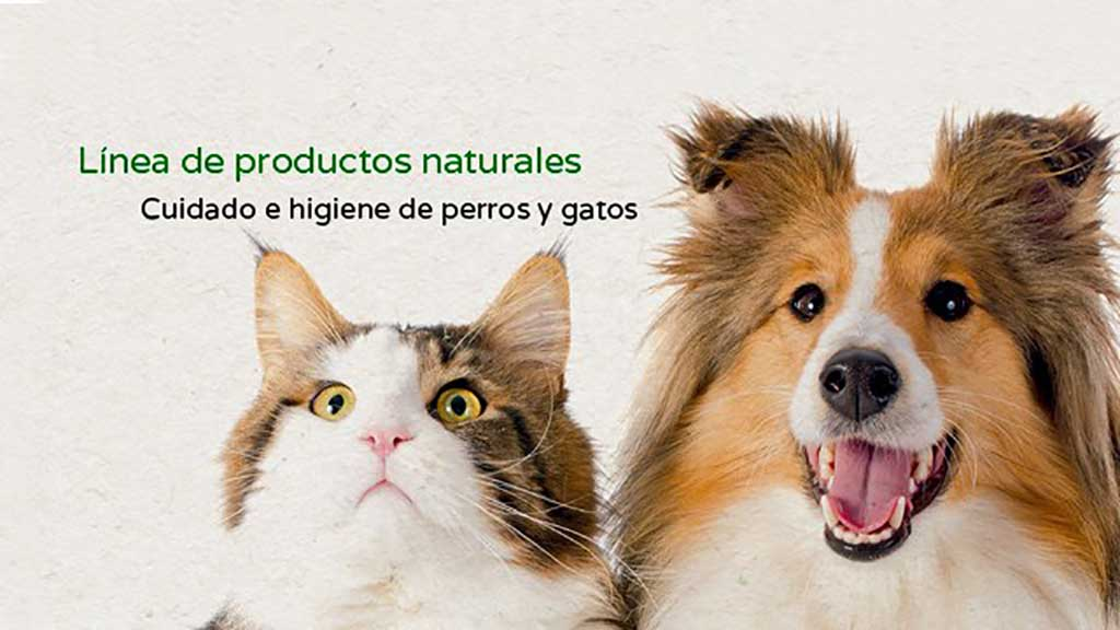 Disane donará sus ventas online del Black Friday a una protectora de animales.
