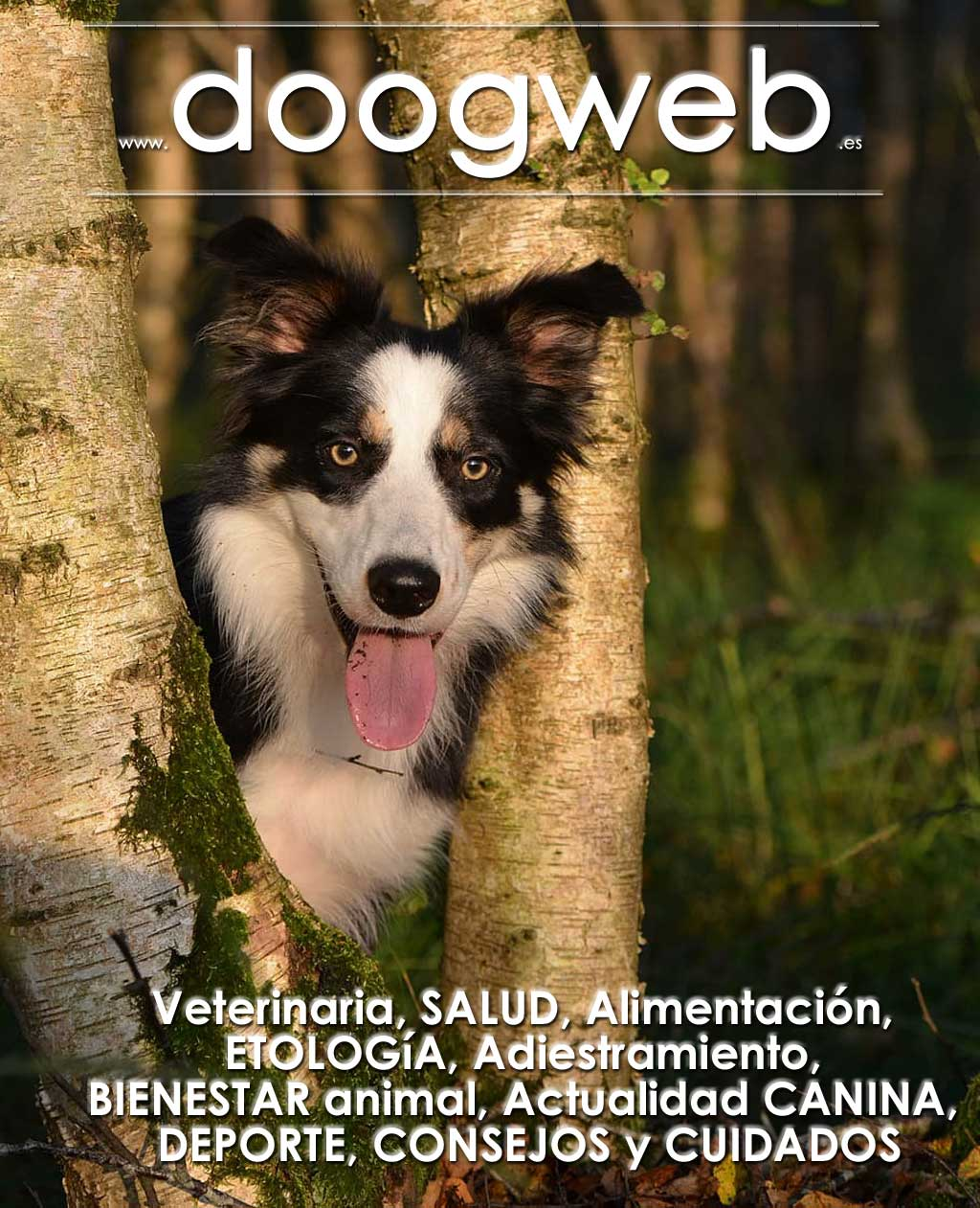 Revista gratis de Doogweb septiembre 2018.