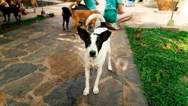 """El objetivo de """"Echa una pata"""" es ayudar a miles de mascotas abandonadas y concienciar sobre el no abandono con vistas a la Navidad."""