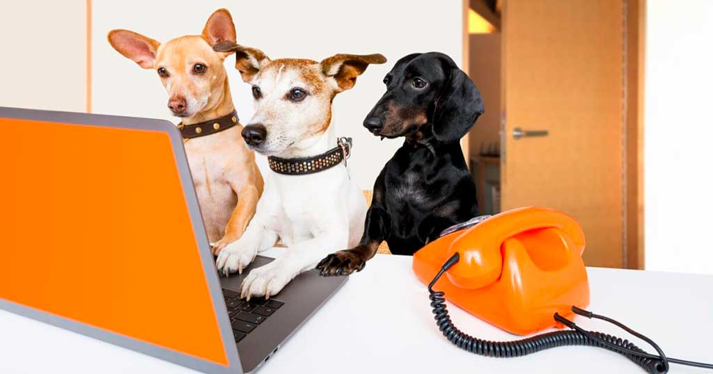 Las razas de perro más buscadas por los españoles en 2020, según Wamiz.