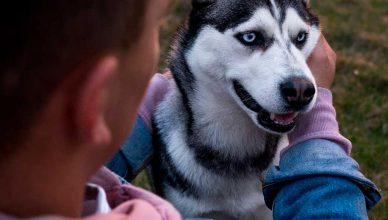 Mascotas vs Dueños: ¿realmente son parecidos?