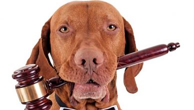 Día Internacional de los Animales 2020: en España se abandona un animal cada cinco minutos.
