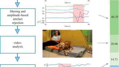 Los perros no procesan bien los detalles fonéticos de nuestras palabras.