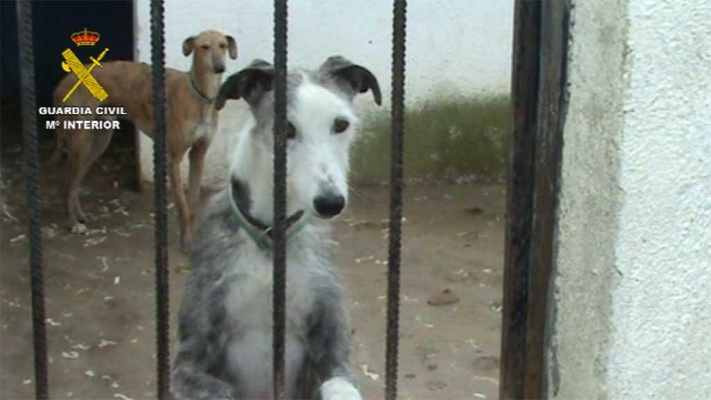 Clausurada una perrera clandestina e intervenidos un centenar de perros.