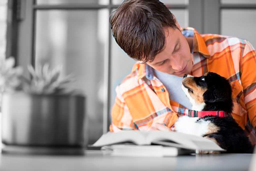 10 consejos para cuidar de las mascotas durante las Navidades.