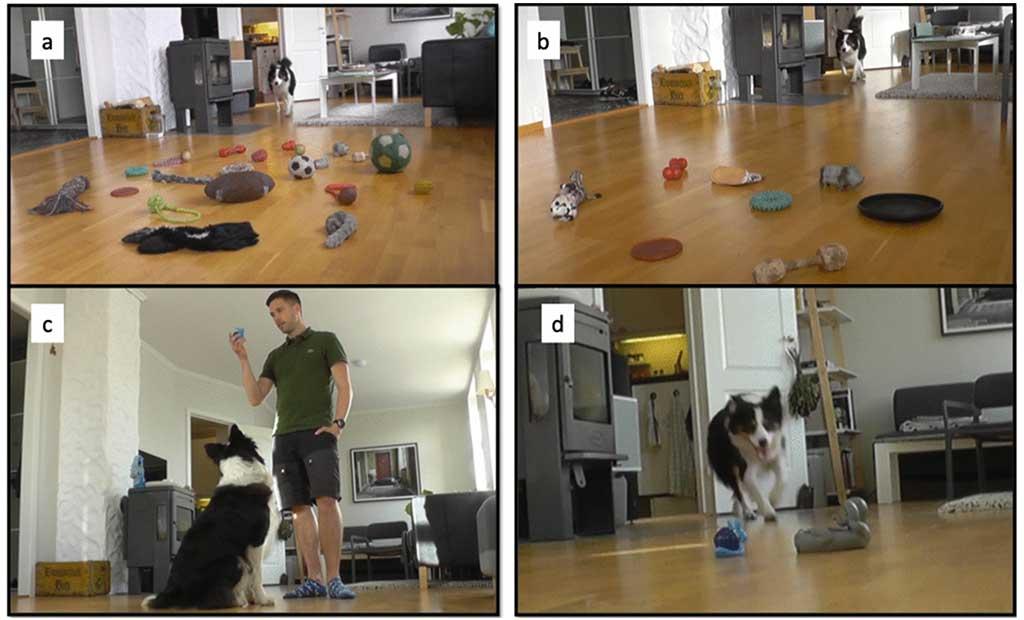 El aprendizaje del perro ¿cuántas repeticiones son necesarias?