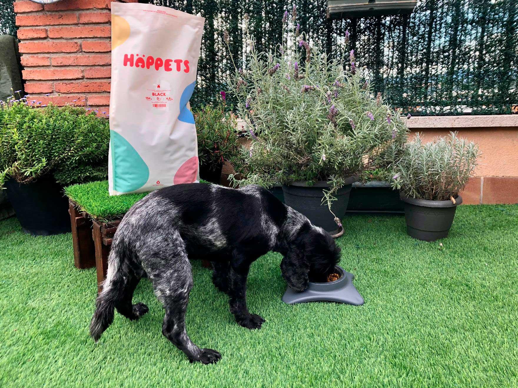 Comida premium personalizada para perros: calidad y sostenibilidad