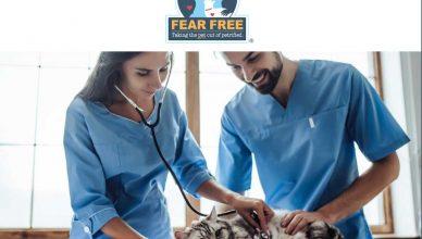 Fear free: Prevenir y aliviar el miedo en el veterinario