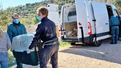 Guardia Civil interviene en una finca 22 perros en condiciones deplorables.