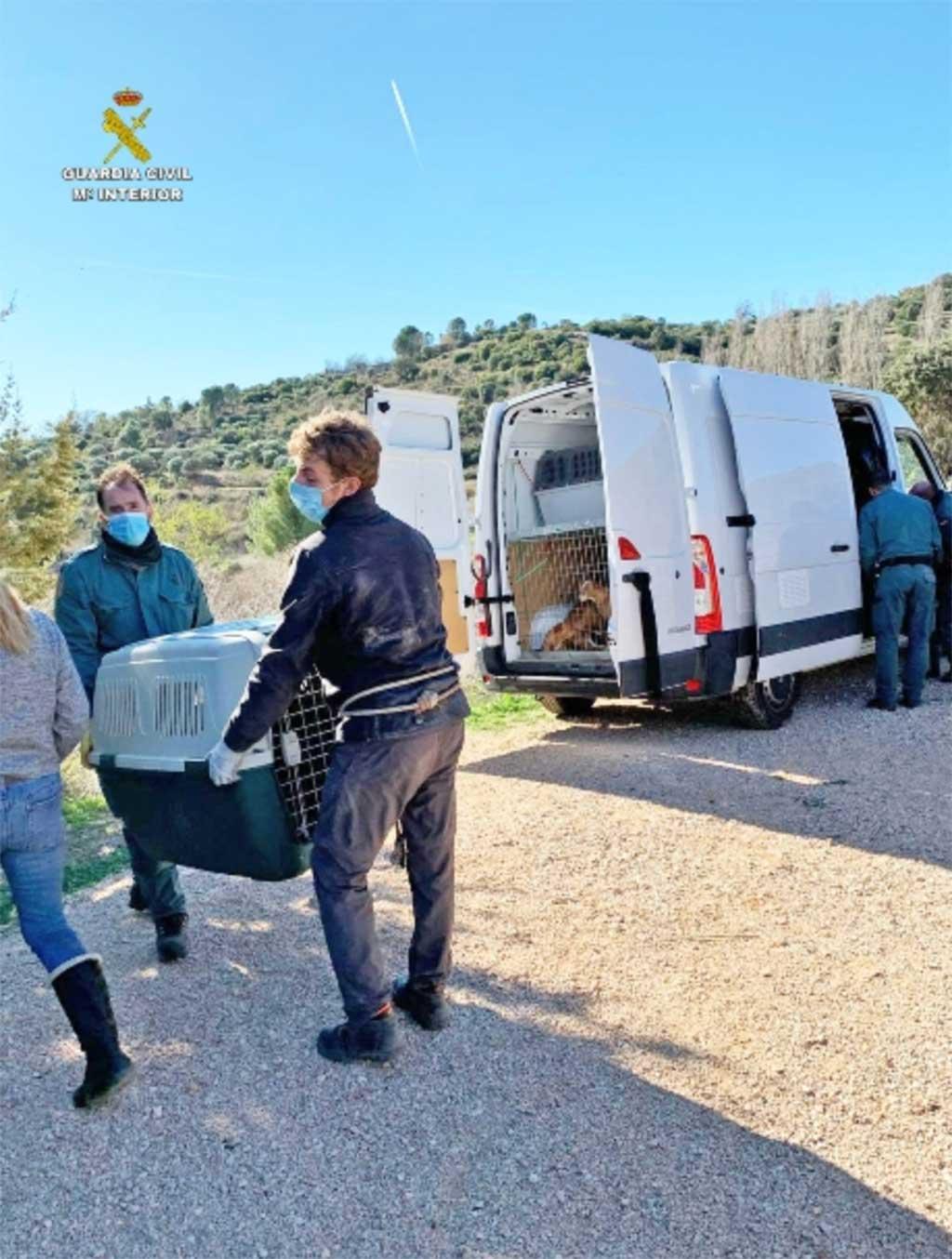 Guardia Civil interviene en una finca 22 perros en condiciones deplorables.