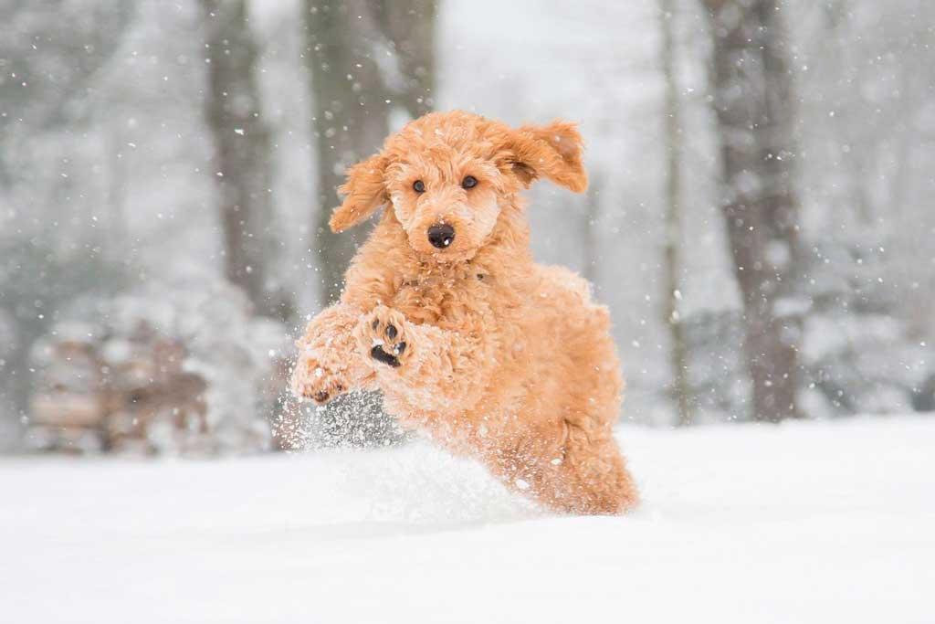 Consejos veterinarios para cuidar de las mascotas ante el temporal de frío.