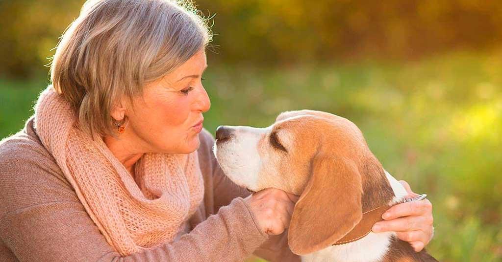 ¿Pensando en adoptar un perro? hay muchos beneficios