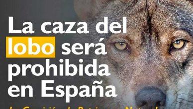 El lobo ya no será especia de caza en España.