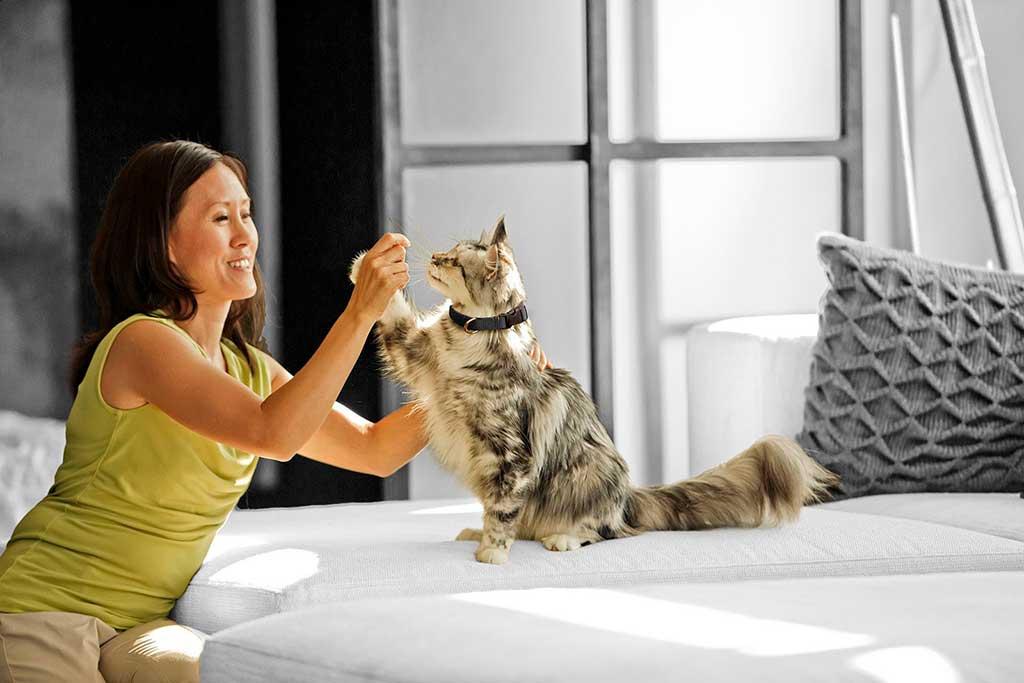 Día Mundial del Gato: Cinco ideas para jugar con gatos y celebrar su día.