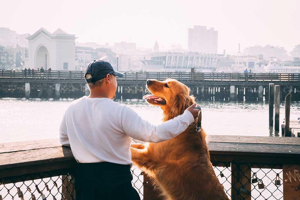 Descubre 5 mitos y realidades acerca de la esterilización canina.