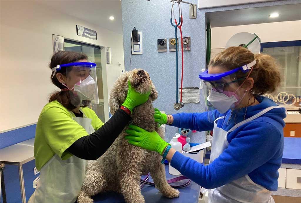 Y si he pasado el coronavirus... ¿le afecta a mi perro?