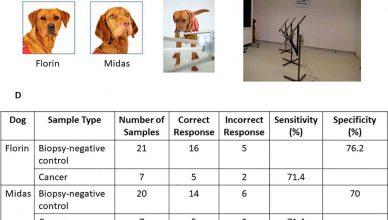 Perros detectores de cáncer de próstata ¿mejores que un olfato artificial?