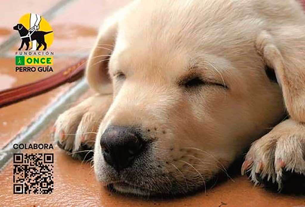 Prevención de la leishmaniosis en los perros guía a través de la colaboración de LETI Pharma con Fundación ONCE.