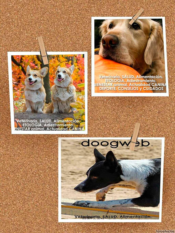 Revistas gratis de perros de doogweb, archivo con todos los números.