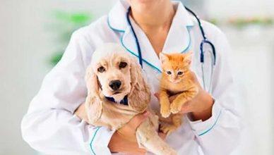 La imprescindible vacunación de perros y gatos.