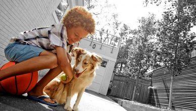 5 tips para cuidar la salud dental de tu perro (o gato).